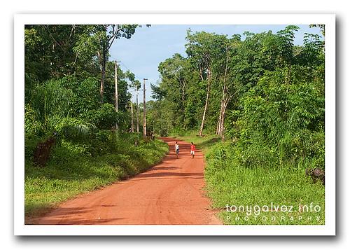 Maguary, FLONA do Tapajós, Brazil