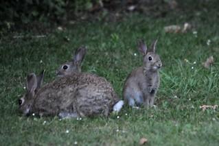 Kaninchenfamilie