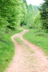Track - Photo of Adamswiller