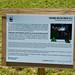 Sound Delta Wild _  Mu et Rodolphe Alexis  Lieu: Parc des Buttes-Chaumont