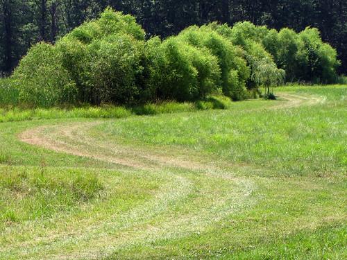 ohio tree field grass landscape canonpowershotsx10is glenoaksfarm