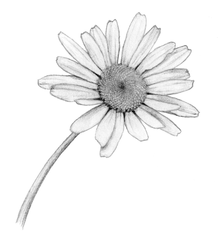 Daisy flower tumblr drawing