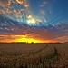 another Biervliet polder hdr sunset