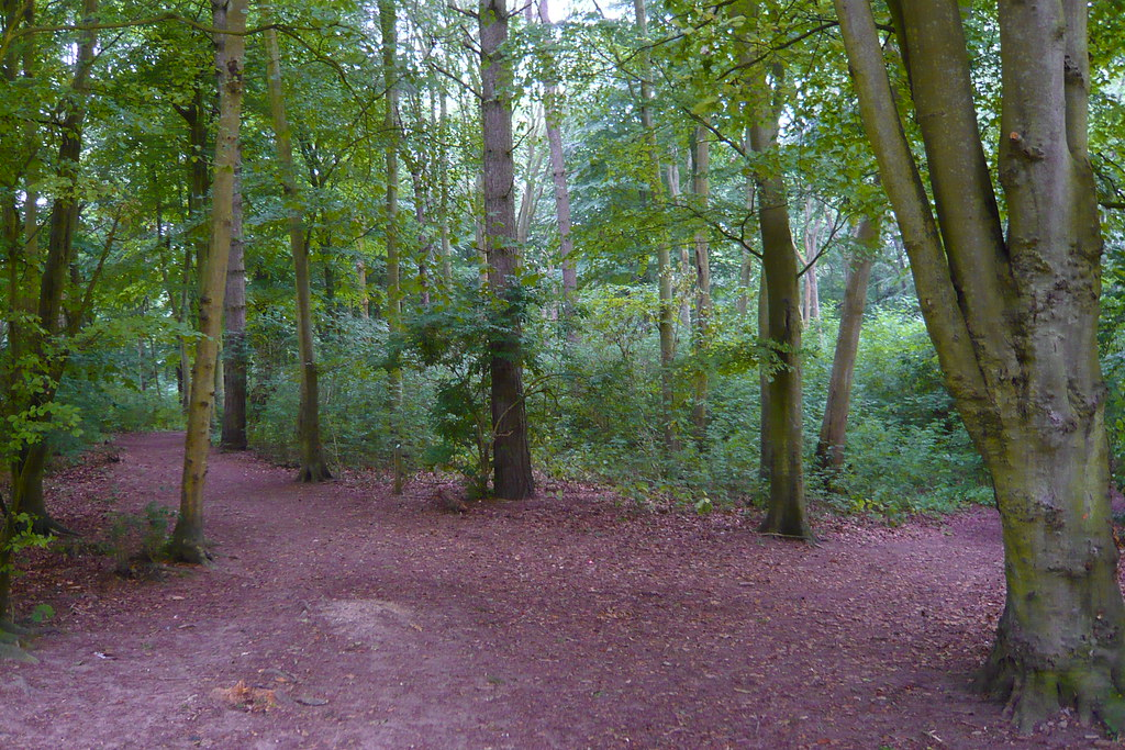Friston Forest
