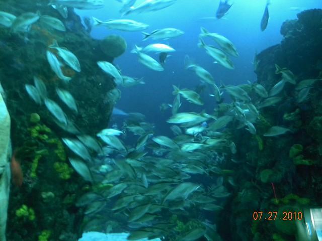 Tennessee Aquarium Chattanooga Tennessee Flickr