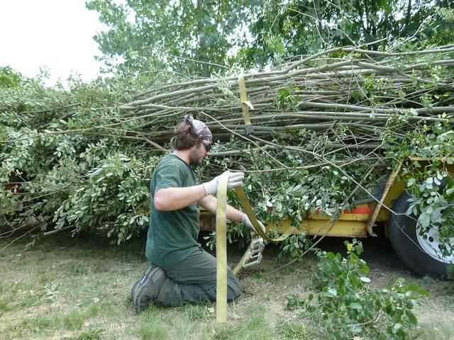 BBG arborist Travis Wolf secures the final load of larger saplings. Photo by Elizabeth Peters.
