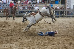 animal sports, rodeo, western riding, event, equestrian sport, sports, reining,