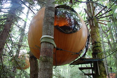 wood, tree, forest, tree house, trunk, jungle,