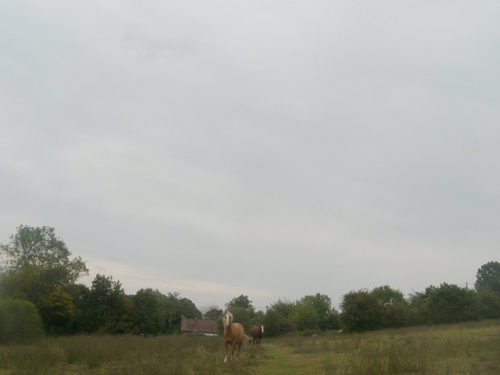 Horses Robertsbridge circular (short)