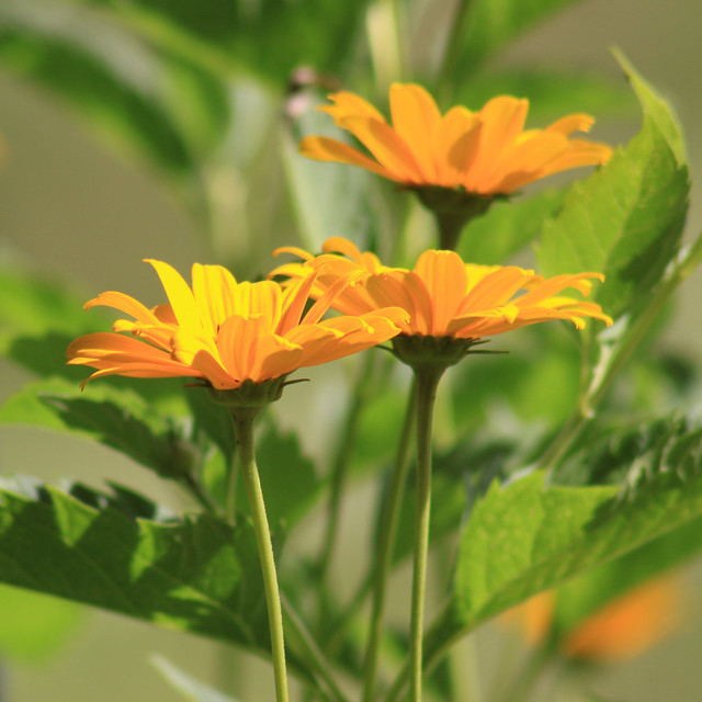 Les belles fleurs de Matante Céline