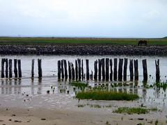 Küste, beach