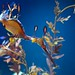Small photo of Weedy Sea Dragon