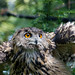 Rotterdam Plaswijckpark-owl by ksvrbrg