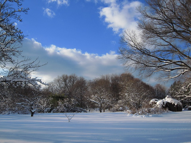 Open spaces covered with snow at BBG. Photo by Rebecca Bullene.