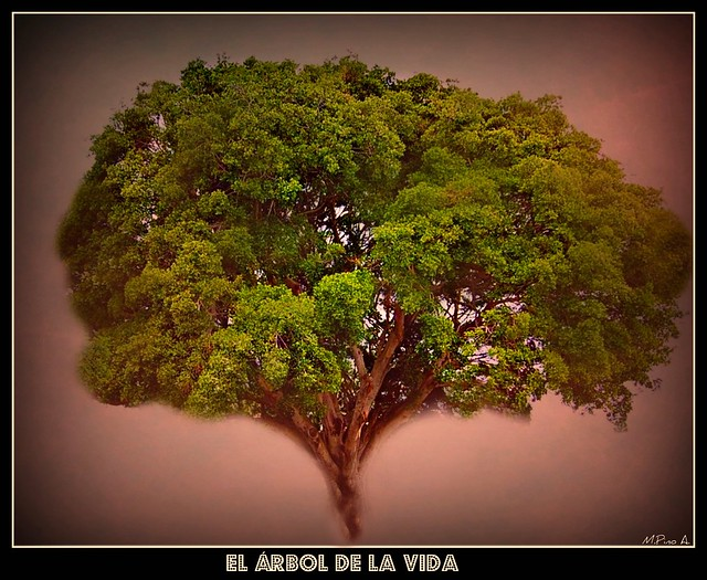 Árbol de la Vida / Tree of the life