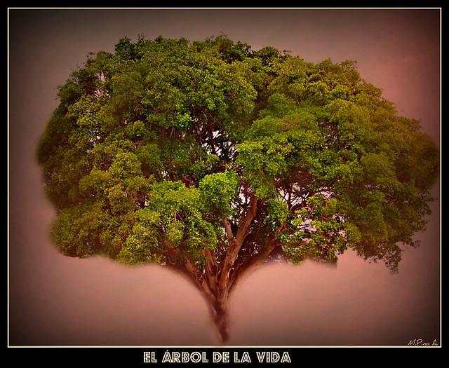 Árbol de la Vida / Tree of the life