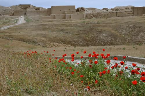 nisa parthaunisa turkmenistan flower ashgabat tm