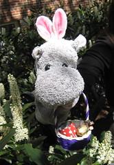 Hippo Bunny