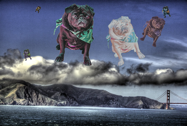 When Pugs Fly Over the Golden Gate Bridge, HDR Collage, or