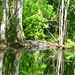 Alligator Canal DSCN3402