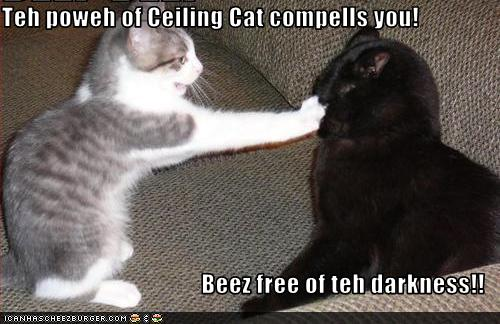 funny-pictures-cat-hits-cat-in-face