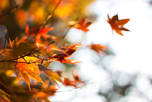 I'll take Fall with a large side of bokeh please!