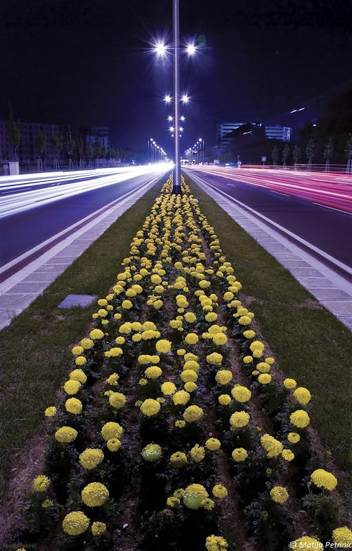Zagreb Avenue
