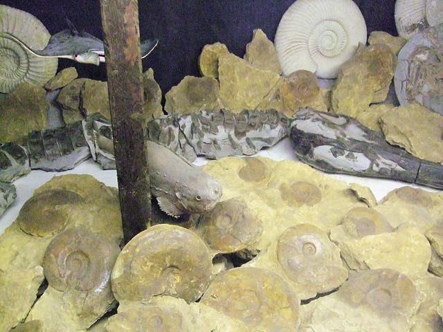 Lyme Regis Food Rocks