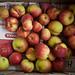 Apples from Cade's appletree. by mirkka.evans