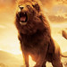 Small photo of Aslan, The Chronicle