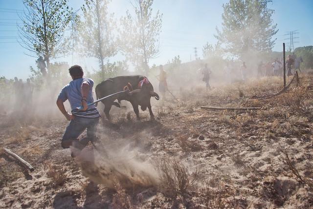 14/09/2010 - Tordesillas - Muerte de Platanito - Toro de la Vega