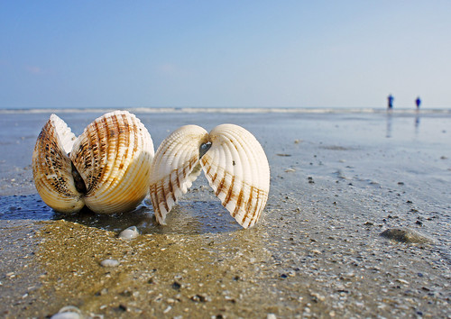 Shell on Kiawah Beach4 | by lotopspin