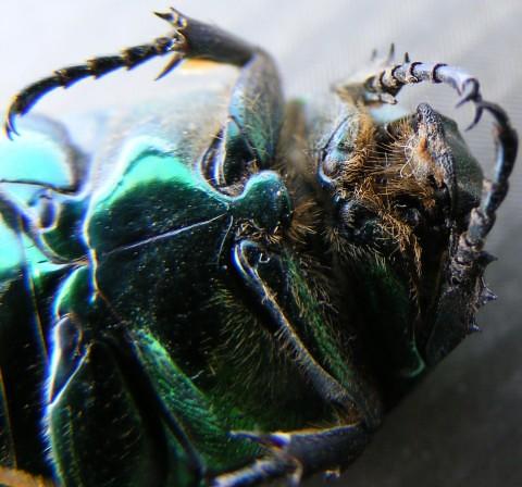 Pest Control - Dead Bug