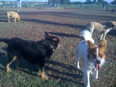 Redondo Beach Dog Park