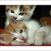"""portrait de deux chatons by """"berend"""""""