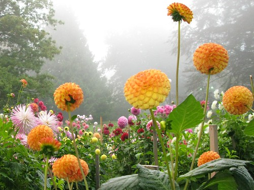 Flowers in Fog