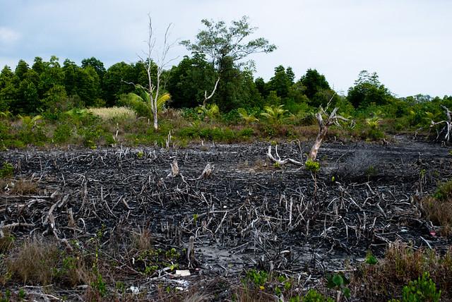 deforestation in cambodia essay format
