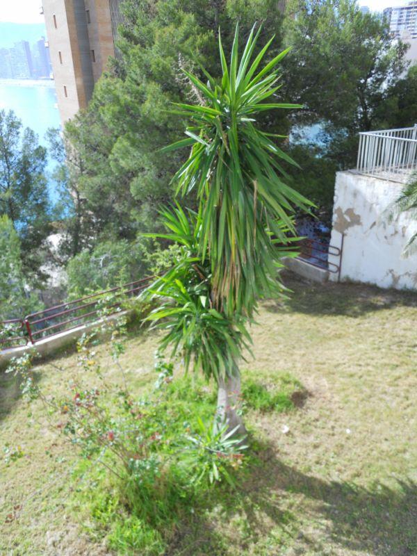 Pinos y palmeras