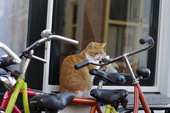 Utrecht cat