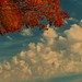 Small photo of Indian Summer