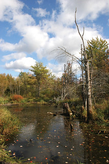 Photo of the Week - Autumn pond scene at Great Bay National Wildlife Refuge, NH
