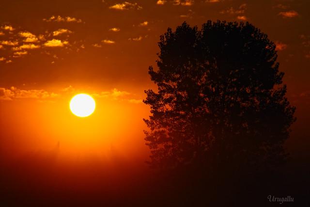 Luz y niebla al amanecer (Ya de nuevo entre vosotros)