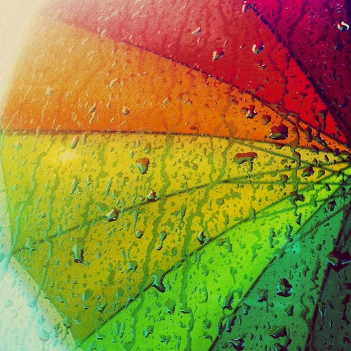 A rain bow umbrella