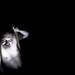 creatures of the night / criatures de la nit... o simplement criatures by Ferran.
