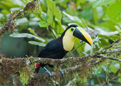 animal(1.0), hornbill(1.0), branch(1.0), toucan(1.0), nature(1.0), green(1.0), fauna(1.0), coraciiformes(1.0), beak(1.0), bird(1.0), wildlife(1.0),