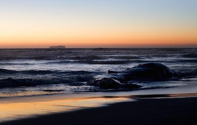 dead whale carcass at sunset on ocean beach; san francisco (2010)