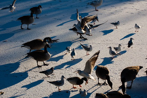 Birds on a frozen lake