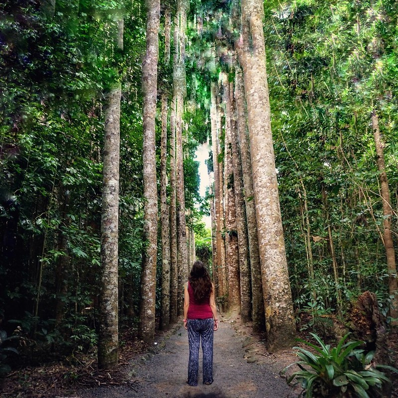 Flora walking through the rainforest trees in Paronella Park, Queensland, Australia