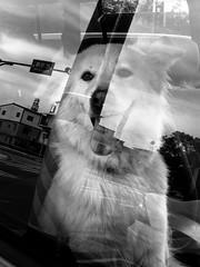 ????Dog in the car