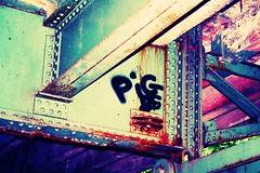 Pig 85